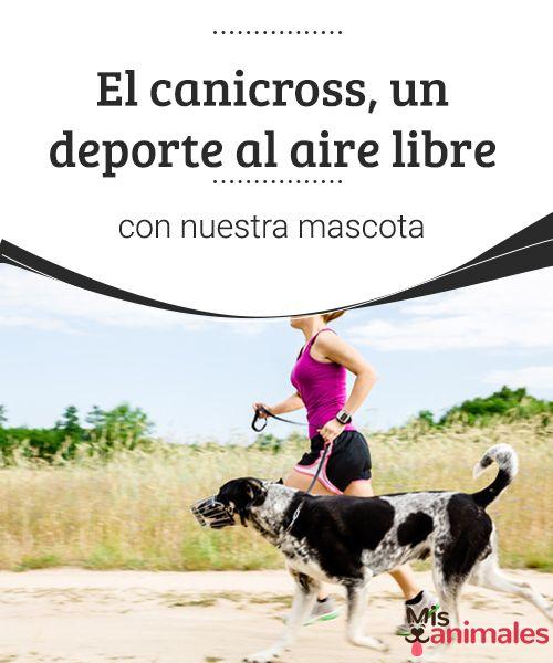 El canicross, un deporte al aire libre con nuestra mascota  Hacer deporte y disfrutar con nuestro perro son algunos de los objetivos que pueden alcanzarse gracias al canicross, que consiste en correr atados a un can. #deporte #mimascota #canicross #curiosidades
