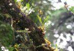 tipos-de-orquideas-espifitas-terrestres-e-saprofitas