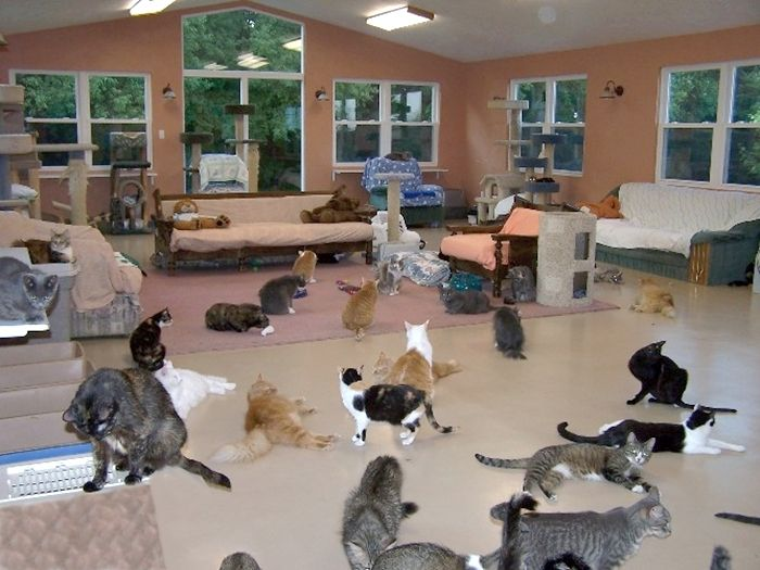 Pet Connection (Avonmore, PA) Room 1 in this wonderful