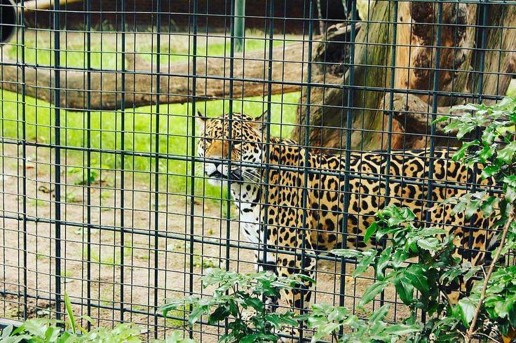 "The Berlin Zoological Garden- Germany 2011 🐆 ""Zoologischer Garten Berlin opened in 1884"" #berlin #zoologischergarten #germany #tyskland #tb🔙 #trip✈️ #europetrip #interrail #interrail2011🚂🌍 #vacation #holi"