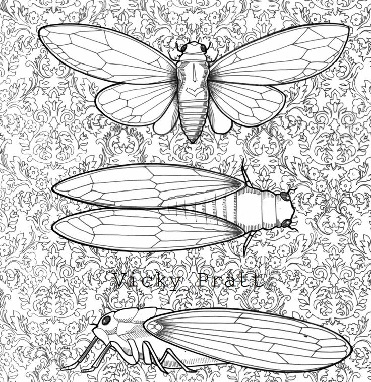 3 Cicadas with filigree background. Unipin fineliner and acrylic ink on drafting film. Find me on Facebook and Instagram as Vicky Pratt - Illustrator. www.vickyprattillustrations.com