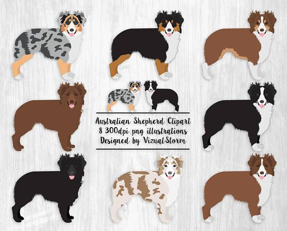 Australian Shepherd Clipart Aussie Illustrations Ranch Dogs Png