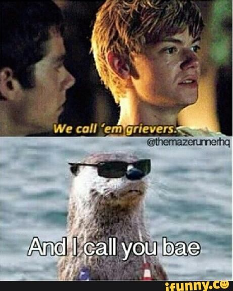 im the otter                                                                                                                                                                                 More