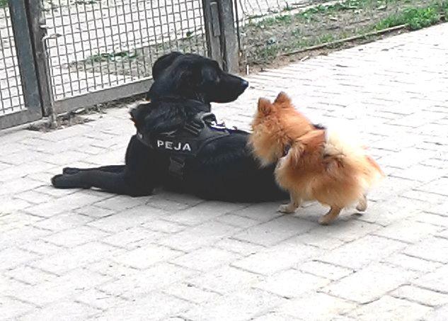08/04/2016 - Torino con Peja