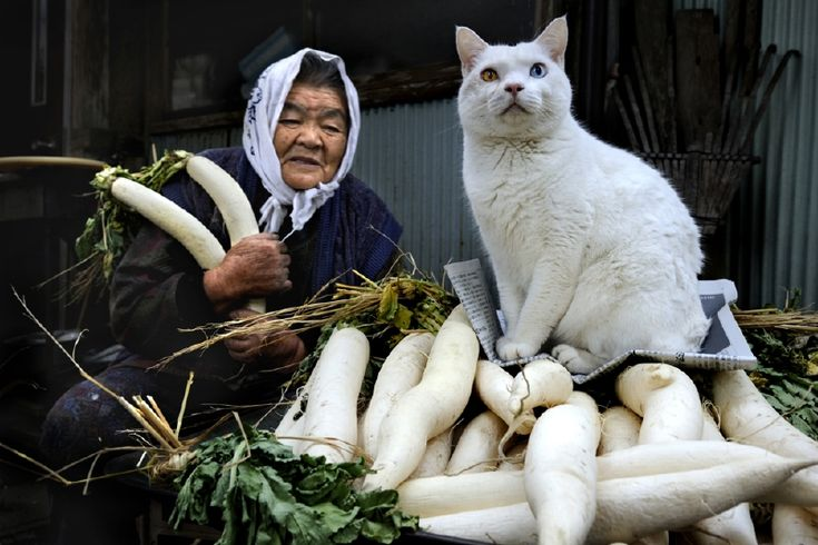 Thirteen years ago, photographer Miyoko Ihara began photographing the relationship between her now 88-year-old grandmother, Misao, and her adorable kitty friend, Fukumaru. Misao discovered Fukumaru in her shed, and since then, the two have become inseparable and the very best of friends.