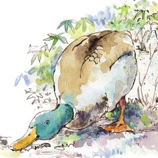 Ducks are natural weed-eaters with a voracious appetite for bugs, slugs and snails, too. From Raising Ducks and Geese: A Guide to Waterfowl - MOTHER EARTH NEWS
