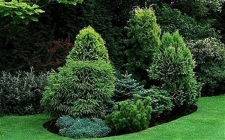 Five fixes to improve your plot - An island bed of conifers, junipers and pine set in a lawn