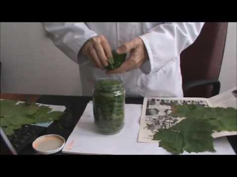 Asma Yaprağı Muhafazası - YouTube