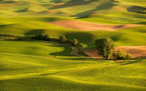mező tavasz út