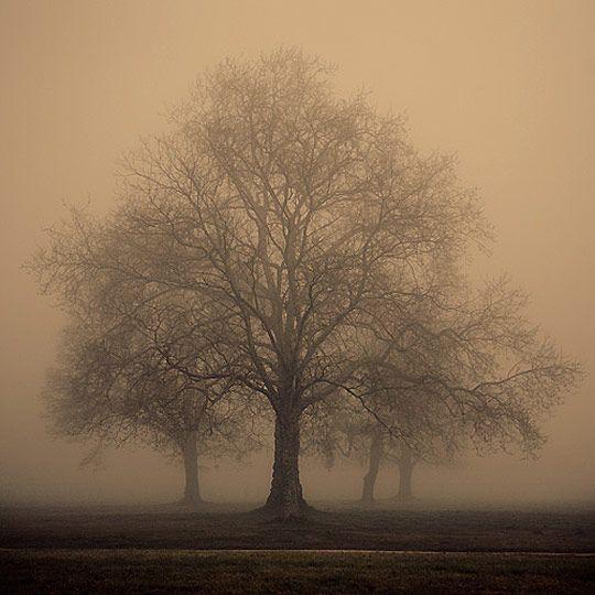 Tree in the mistPhotos, Lemonade Mouth, Nature, Mists, Winter Trees, Arbors, Beautiful, Foggy Photography, Newborns Photography