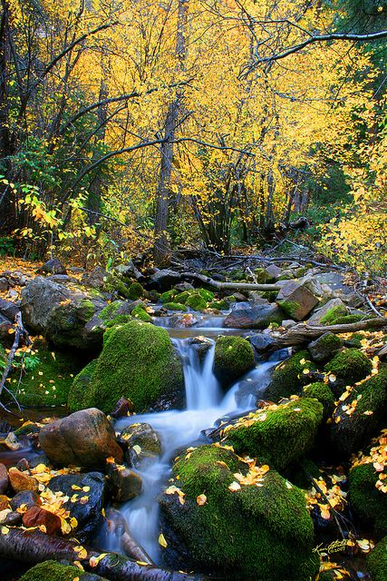 """Autumn Steam by Ken Fortie on Flickr. """"A small side stream in Big Cottonwood Canyon, Utah in the fall."""""""