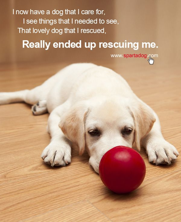1000 images about dog lover on pinterest shelters pets and dog