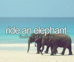 Ride an elephant defiantly