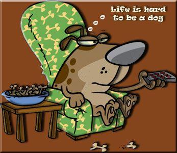 Hondenkoekjes - de website voor het zelf maken van hondenkoekjes, hondensnacks, hondenvoer, hondentaartjes etc. etc.