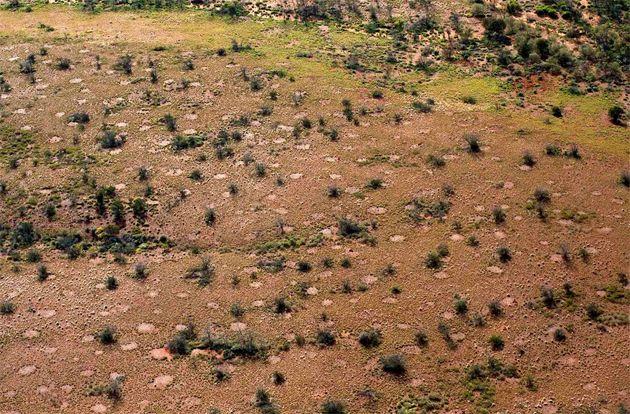 Australiens Feenkreise doch das Werk von Termiten? . . . http://www.grenzwissenschaft-aktuell.de/feenkreise-doch-von-termiten20160909
