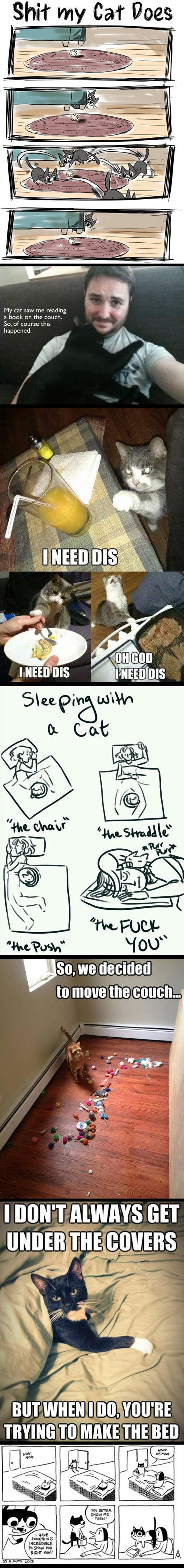 Cat owners will understand...: