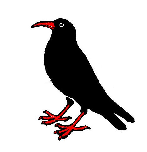 "The national bird of Cornwall - the Cornish Chough (pronounced ""chuff"")"