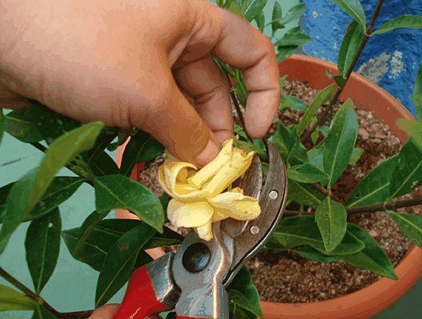 como-cortar-flores-sin-dañar-a-las-plantas
