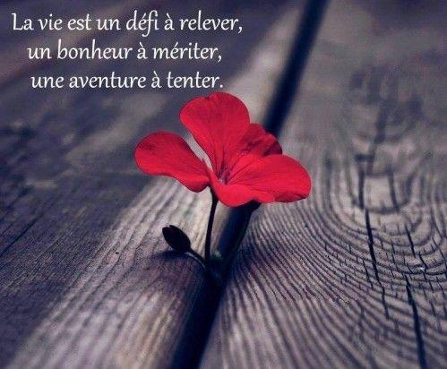 La vie est un défi à relever, un bonheur à mériter, une aventure à tenter.  Mère Teresa