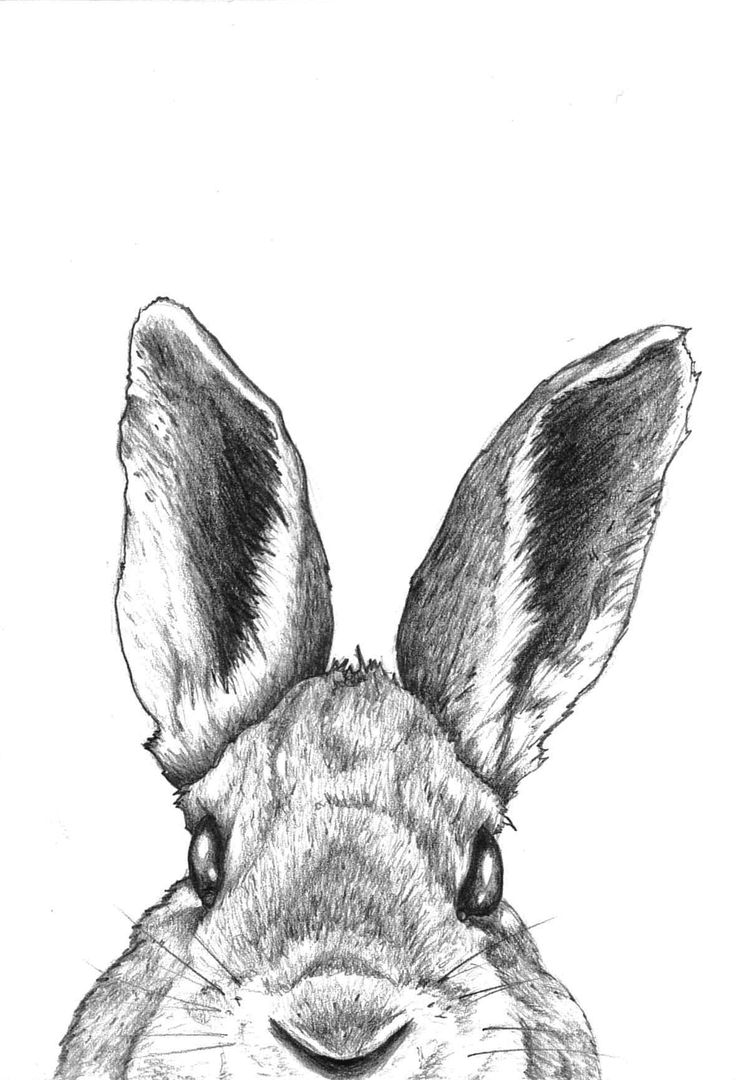 Line Drawing Of Rabbit Face : Best images about rabbit on pinterest easter