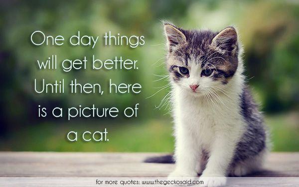 One day things will get better. Until then, here is a picture of a cat.  #animals #better #cat #day #one #picture #quotes #things