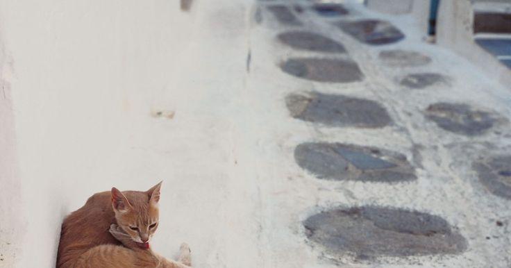 Cómo hacer un repelente casero para perros y gatos