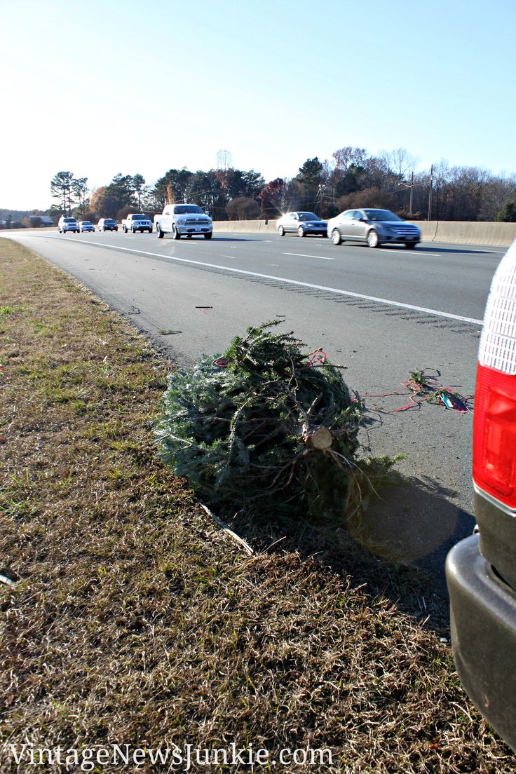 Finding Christmas Tree on Side of Interstate