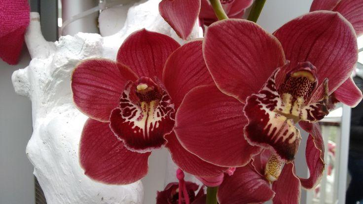 The best colours of Kaukhenhof's gardens | Forecastingirl