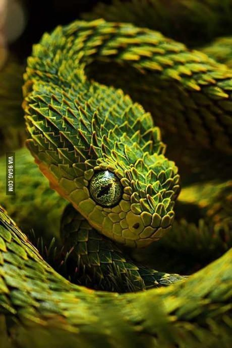 Photogenic snake beautiful yellow green color like a