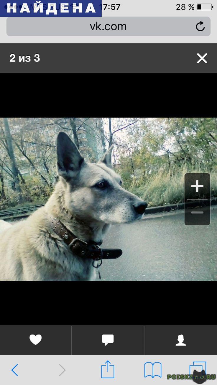 Найдена собака г.Нижний Новгород http://poiskzoo.ru/board/read32038.html  POISKZOO.RU/32038 Найдена собака на ул. Премудрова в Ленинском районе. Видно, что домашняя, в ошейнике и с медальоном. Срочно откликнуться хозяевам!   РЕПОСТ! @POISKZOO2 #POISKZOO.RU #Найдена #собака #Найдена_собака #НайденаСобака #Нижний #Новгород