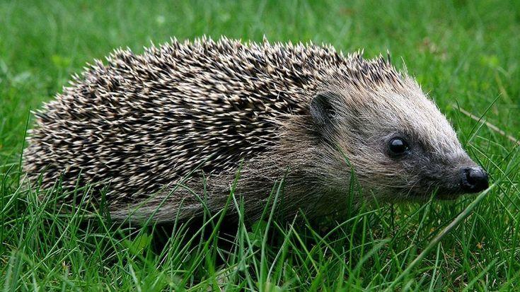 Dramatisches Artensterben: Feldhase, Rebhuhn, Igel – Bayern gehen die Tiere aus …