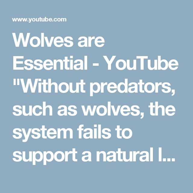 "Wolves are Essential - YouTube    ""Without predators, such as wolves, the system fails to support a natural level of biodiversity, and may cease to exist altogether. The preservation of keystone species is essential for maintaining the historic structure and function of the ecosystems they inhabit."""