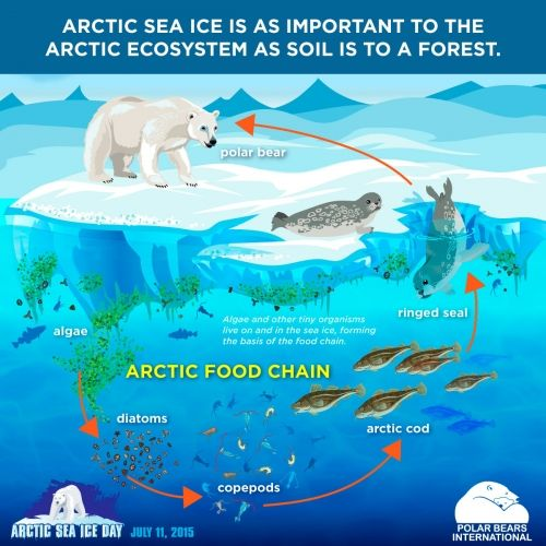 Arctic Ocean Food Web: 17 Best Images About Environmental Issues On Pinterest