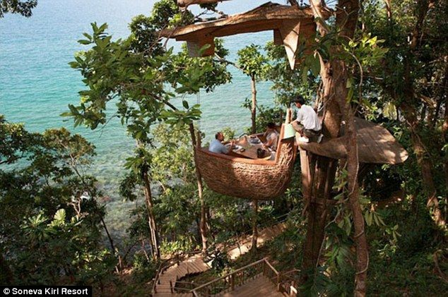 Fancy eating at the NEST-aurant? The 'bird abode' dining pods perched on tree tops where waiters fly though the air on zip-lines