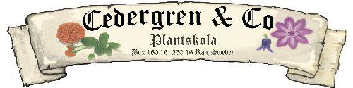 Cedergren & Co - Klätterrosor