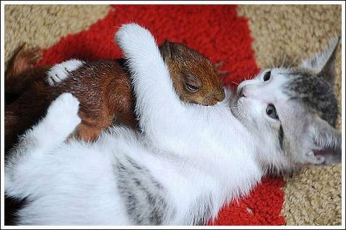 Cat: Cats, Photos, Animals, Sweet, Squirrels, Pet, Animal Friends, Kittens, Baby
