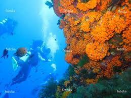 Fotografia subacquea: attrezzature e macchine fotografiche subacquee