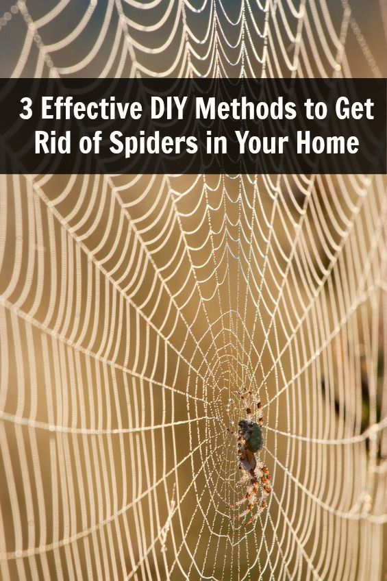 3 Effective DIY Methods to Get Rid of Spiders in Your Home: Pepperment. Add a few drops of this essential oil into a spray bottle, adding a little liquid dish soap and filling with water. Spray around your windows and doors and just anywhere that you think they may be crawling around. Vinegar and coconut oil. Mix the two together into a spray bottle and spray around doors and windows, in the shower and under beds. Citrus oils. Lemons, limes and oranges are great essential oils to spray…