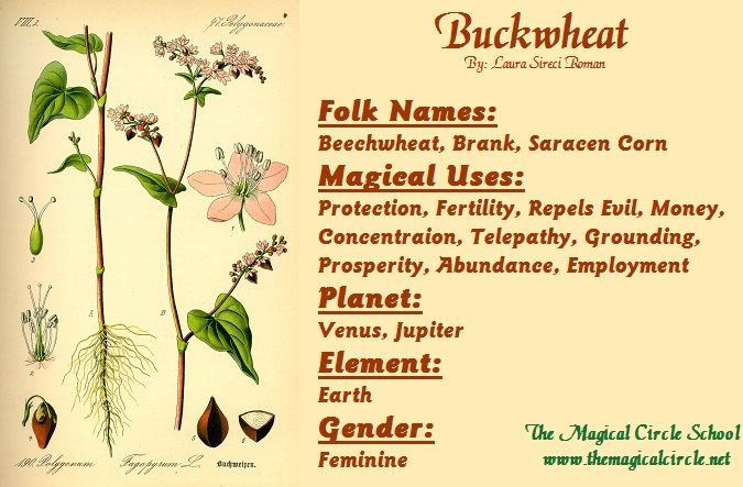 Buckwheat Magical Properties - The Magical Circle School - www.themagicalcircle.net