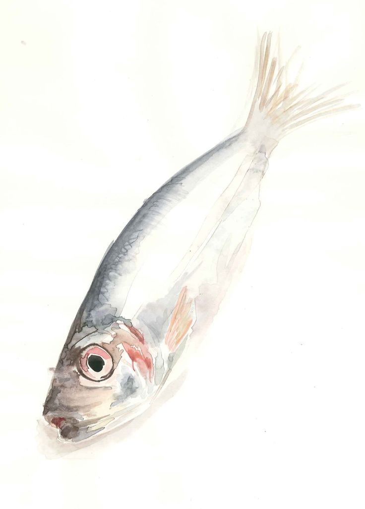 This is a beautiful (but, tragically, dead) fish. Watercolour, 2008. Hope you like it!