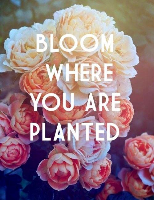 36 best images about floral quotes on pinterest cheap Flowers that make you happy