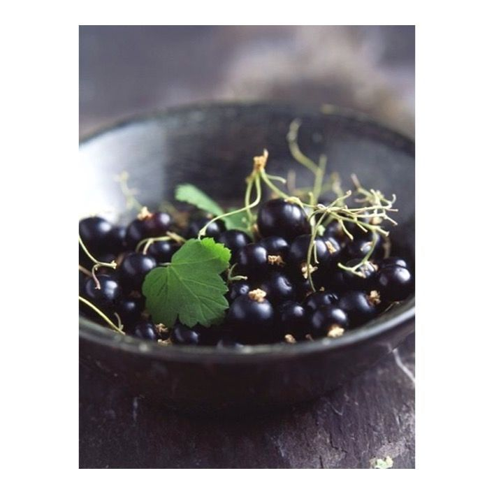 ✖️Ingredient Spotlight✖️ Blackcurrant seed oil is widely known for its many healing properties and holds the ability to treat skin disorders, including eczema and psoriasis. 🙌🏻 This potent berry is one of the richest sources of omega-6 essential fatty acid gamma linolenic acid (GLA) which works to prevent moisture loss from the surface of the skin … resulting in smoother firmer and more hydrated skin 💦 Blackcurrant Seed oil is in our Night Repair Serum.