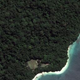 Green forest, Peucang Island.