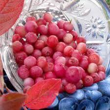 Pink Lemonade Blueberry Plants For Sale | Pink Lemonade Blueberry Plant | Willis Orchards
