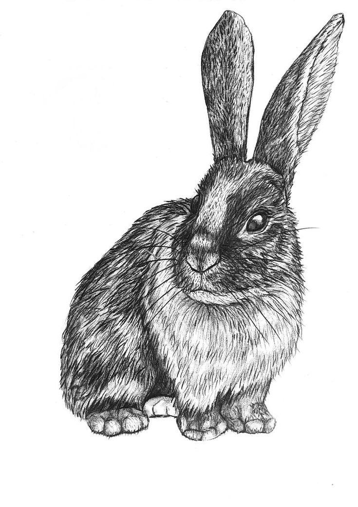 Original bunny Rabbit pencil drawing - 91 in 2020   Pencil ...