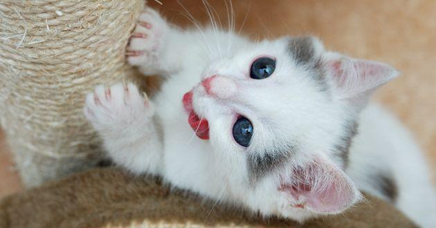 Votre chat griffe ? Une comportementaliste répond à vos questions !