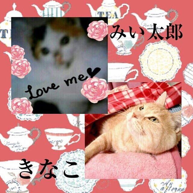 先代猫✨みい太郎と、きなこ✨ みい太郎が生きて居たら、きなちゃん、大福ちゃんで😸😸😸其々の性格で可愛く楽しかっただろうな💞 って時々考える(*˘︶˘*).。.:*♡ みい太郎は仔猫の時に兄がもらって来て家族みんなで16年間✨一緒に暮らしました💕仔猫の時の😸みい太郎写真です。  #家族写真 #家族#猫との暮らし #三毛猫 #先代猫 #今はお空在住✨#愛猫 #きなちゃんとは会った事は無し#大好き #きなちゃん #みい太郎 #猫 #ねこ #ネコ #にゃんこ #cats #みんねこ #ペコねこ部 #にゃんすたぐらむ #ねこすたぐらむ #茶トラ #大切 #ずっと忘れないよ🎀#三毛猫大好き #ミケ猫