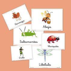 Fichas de Animales: Fichas de los insectos