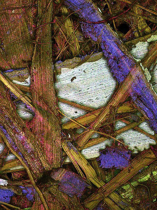Plant fibers in a paper (100x). Confocal microscopy.