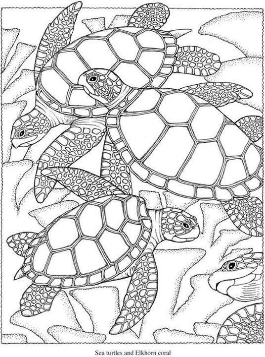 90 best reptile images on Pinterest | Kunstzeichnungen, Malbücher ...